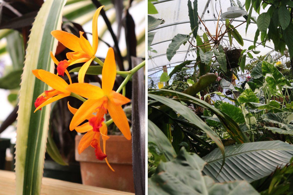 tn-tropicals-plants1