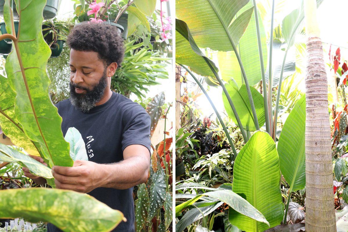 tn-tropicals-plants2